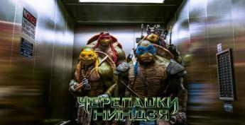 черепахи обложка